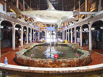 Attractions Key West Aquarium